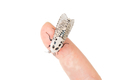 Wood leopard moth Zeuzera pyrina on a white background - PhotoDune Item for Sale