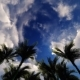 Alley Palms on Clouds Sky - VideoHive Item for Sale