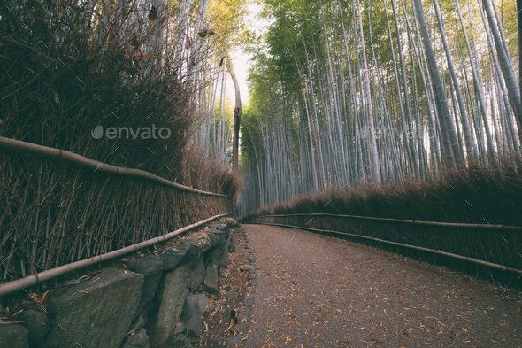 Wandering through the Bamboo Forest - Stock Photo - Images