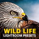 20 Wild Life Lightroom Presets - GraphicRiver Item for Sale