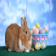 Easter Bunny - VideoHive Item for Sale
