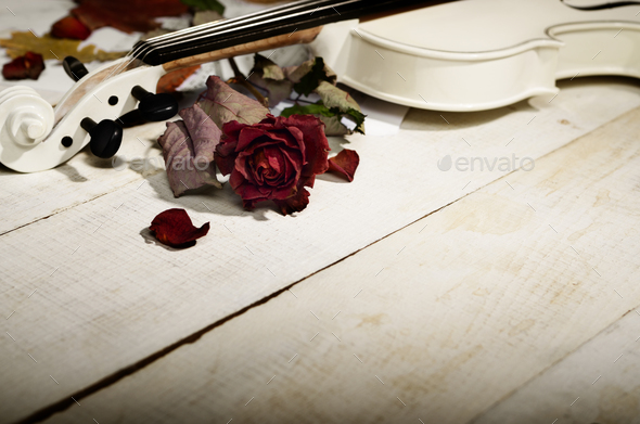 Close view of a white violin dry rose and musical notes on woode - Stock Photo - Images