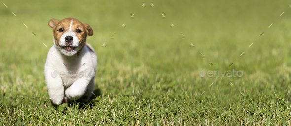 Dog puppy playing - Stock Photo - Images