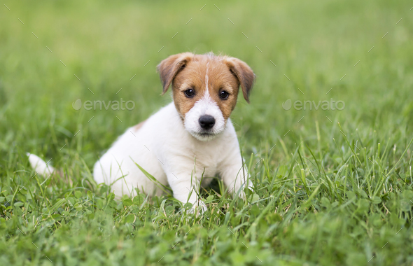 Happy dog puppy sitting - Stock Photo - Images