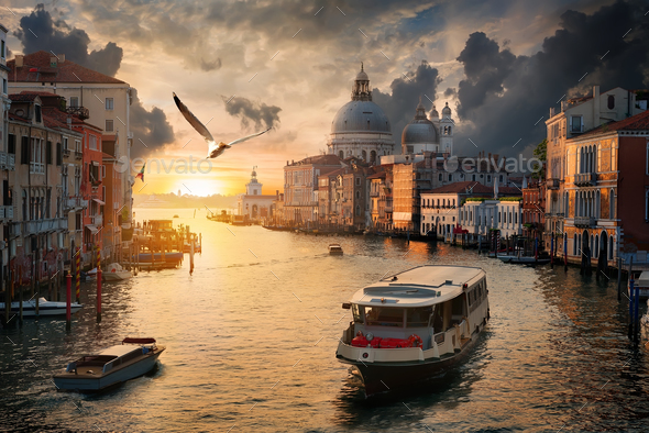 Seagull over Grand Canal - Stock Photo - Images
