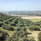 Countryside of the olive trees near mengibar, province of Jaen, Spain - PhotoDune Item for Sale