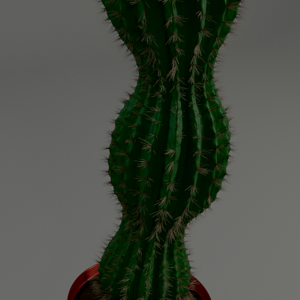 Cactus in a pot - 3DOcean Item for Sale