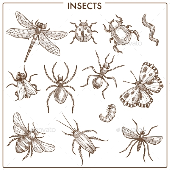 Insects - Animals Characters