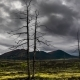 Dead Trees on a Sunset Sky Background. Kamchatka - VideoHive Item for Sale