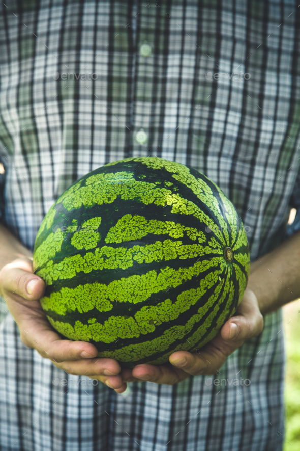 Watermelon - Stock Photo - Images