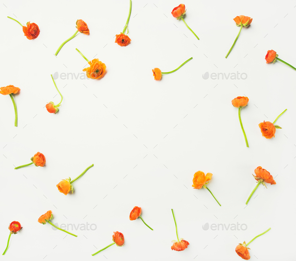 Flat-lay of orange buttercup flowers over white background, copy space - Stock Photo - Images