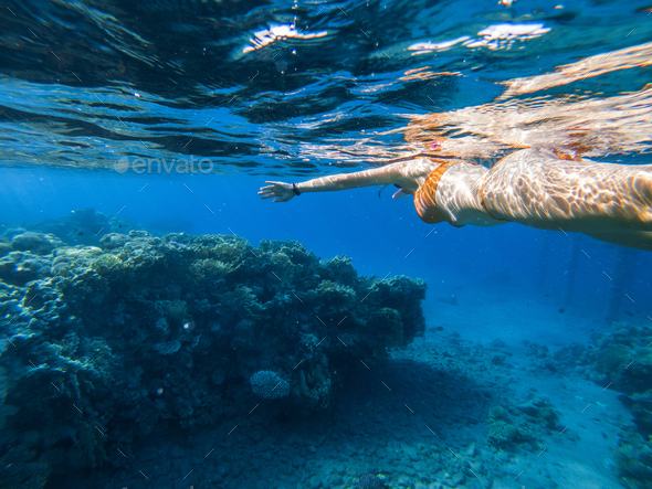 Woman snorkeling underwater above coral reef - Stock Photo - Images