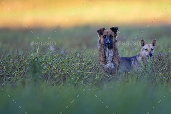 Dogs in a clearing - Stock Photo - Images