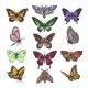 Butterfly Vectors