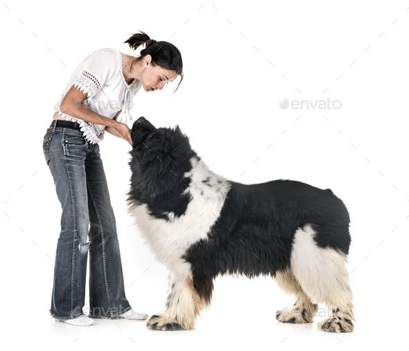 newfoundland dog and woman - Stock Photo - Images