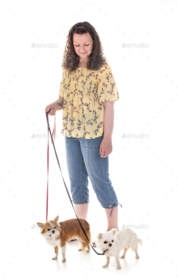 woman and chihuahuas - Stock Photo - Images