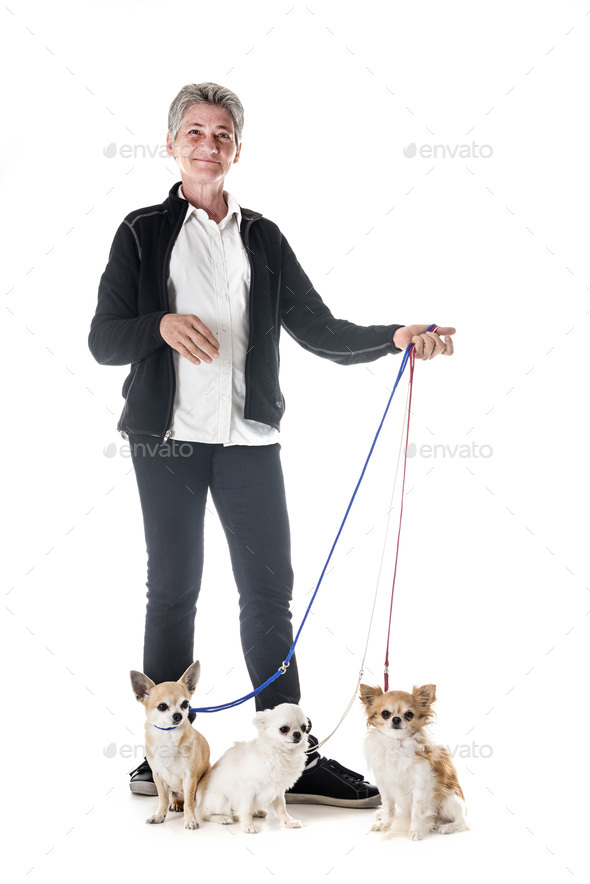 chihuahuas, owner and obedience - Stock Photo - Images