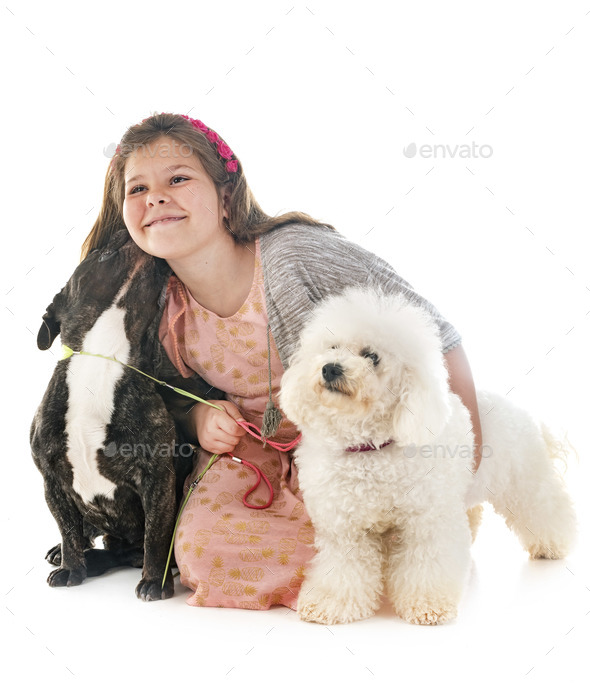 girl and little dogs - Stock Photo - Images