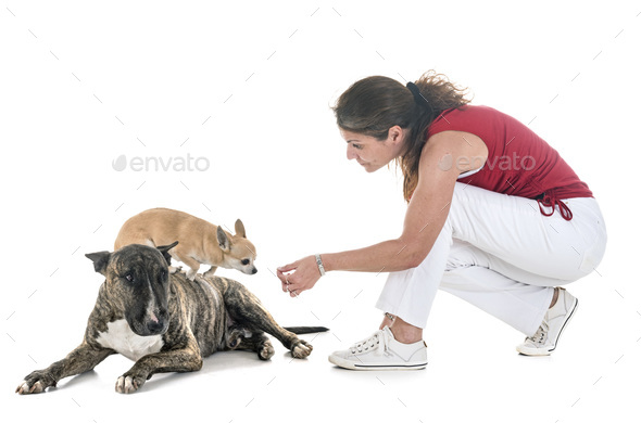 dogs, owner and obedience - Stock Photo - Images