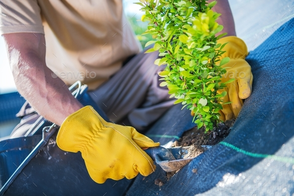 New Garden Trees Planting - Stock Photo - Images