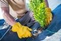 New Garden Trees Planting - PhotoDune Item for Sale