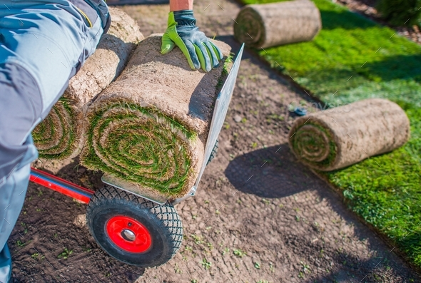 Grass Turfs Installer - Stock Photo - Images