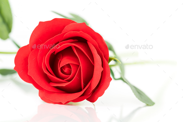 Single Red plastic fake roses on white_-6 - Stock Photo - Images