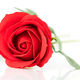 Single Red plastic fake roses on white_-6 - PhotoDune Item for Sale