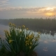 Misty Dawn on the River Bank with Beautiful Flowers - VideoHive Item for Sale