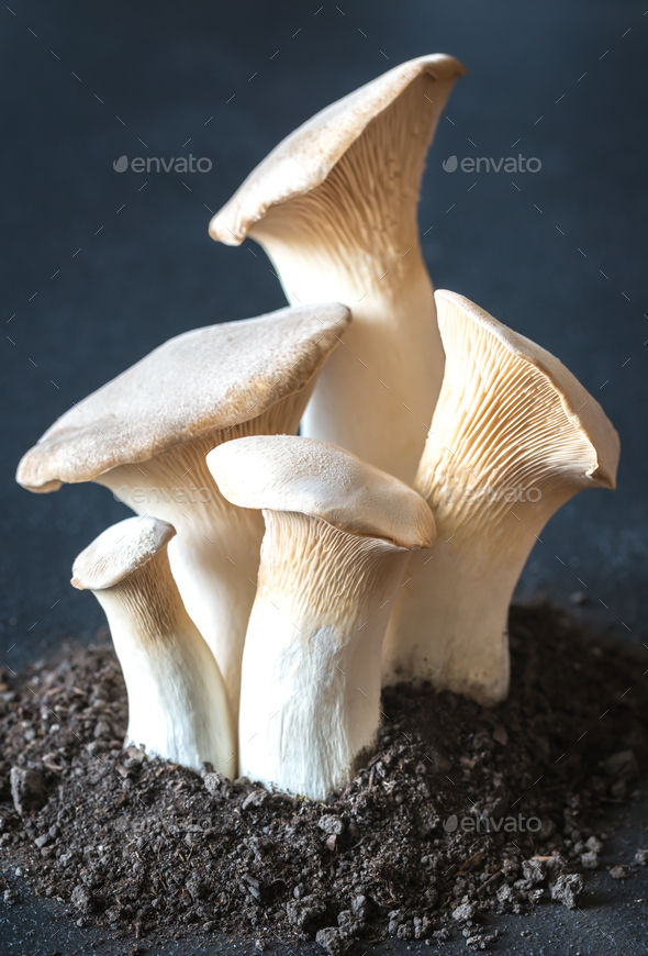 King oyster mushrooms - Stock Photo - Images
