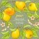 Pears Vector Frame