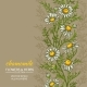 Chamomile Vector Background