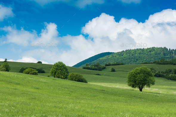 Rolling green hills with trees and blue sky with clouds - Stock Photo - Images