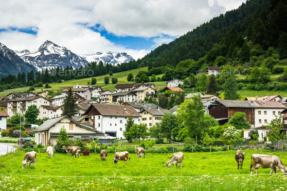 Cow pasture and Alps in background of Mustair village,Switzerlan - Stock Photo - Images