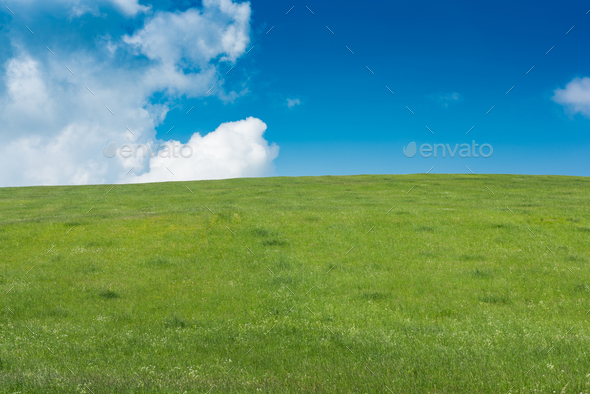 Green grass field on small hills and blue sky with clouds - Stock Photo - Images
