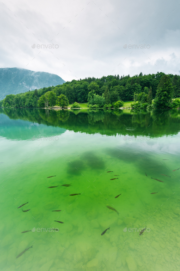 Bohinj Lake, Slovenia top destination - Stock Photo - Images