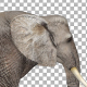 Elephant Walk Attack - VideoHive Item for Sale