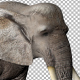 Elephant Eat - VideoHive Item for Sale