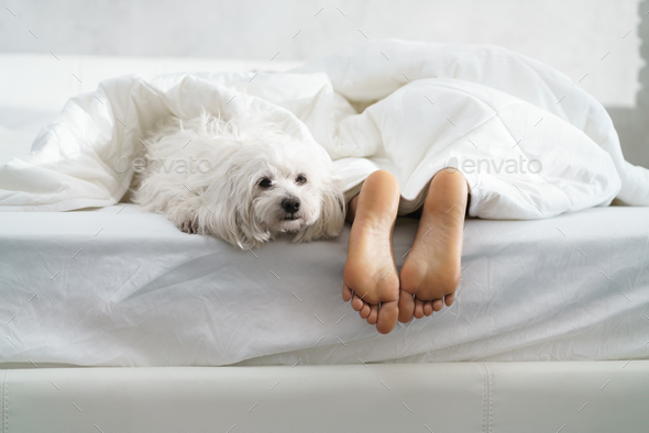 Black Girl Sleeping In Bed With Dog And Showing Feet - Stock Photo - Images