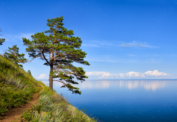 One pine on a hillside near Baikal water - Stock Photo - Images