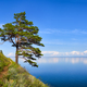 One pine on a hillside near Baikal water - PhotoDune Item for Sale
