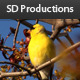 Golden Finch Set Two - Nature Collection  - VideoHive Item for Sale