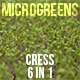 Microgreens Cress - VideoHive Item for Sale