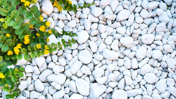 White pebble and a green weaving plant like a frame - Stock Photo - Images