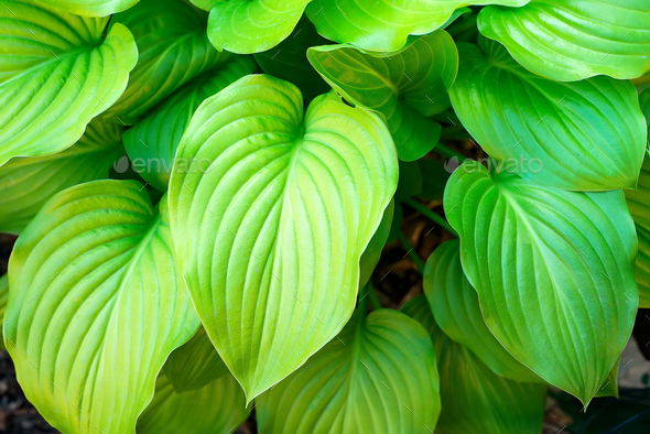 Photo of many beautiful green flower leaves, nature background - Stock Photo - Images