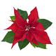Poinsettia Flower Isolated - PhotoDune Item for Sale
