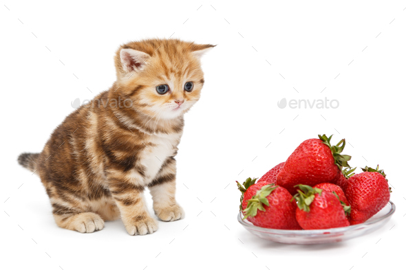 Small kitten and a bowl with strawberries - Stock Photo - Images