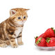 Small kitten and a bowl with strawberries - PhotoDune Item for Sale
