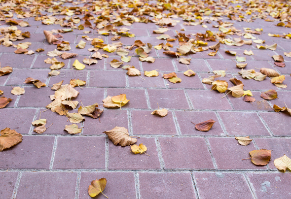 Yellow leaves on the stone tiles. - Stock Photo - Images