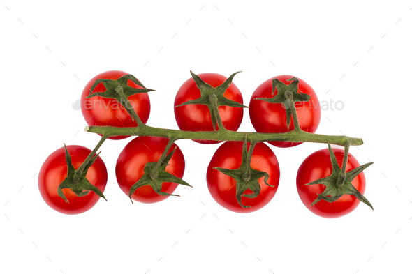 cherry tomatoes on green branch - Stock Photo - Images